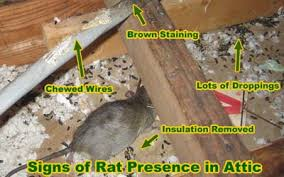 Rodent Control Houston, Rodent Control Dallas