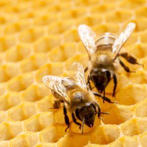 bee removal prosper tx
