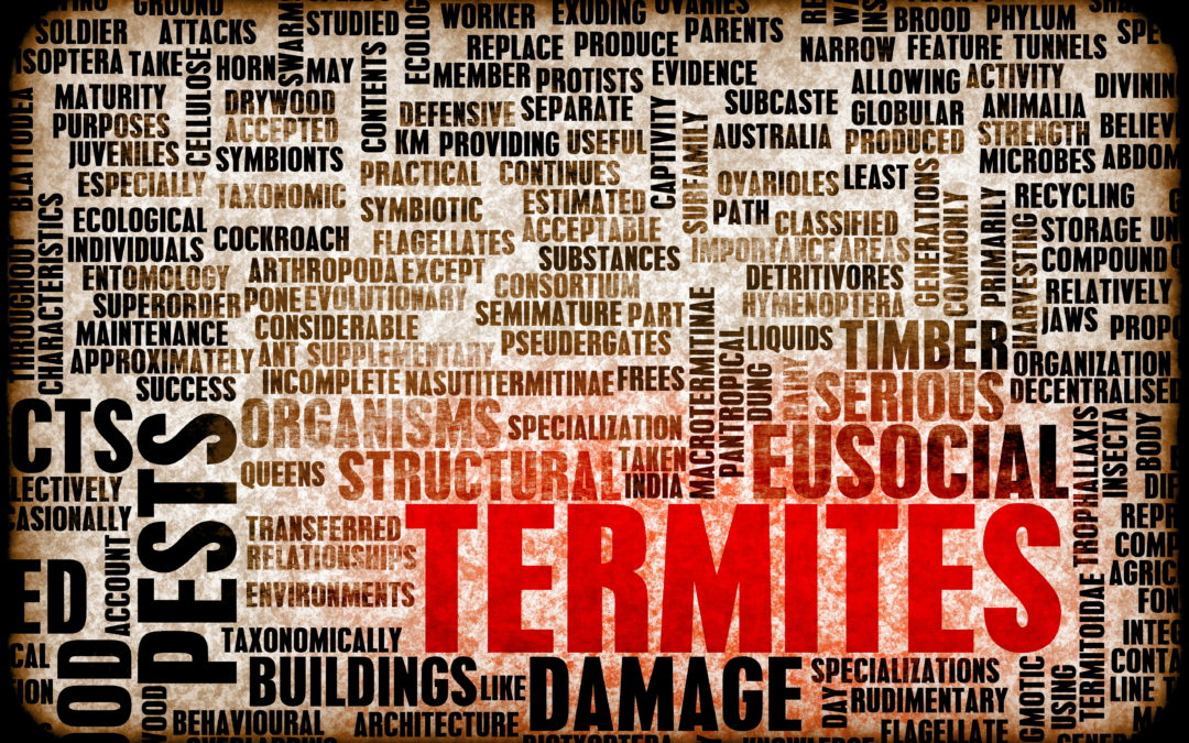 Termite Treatment Houston