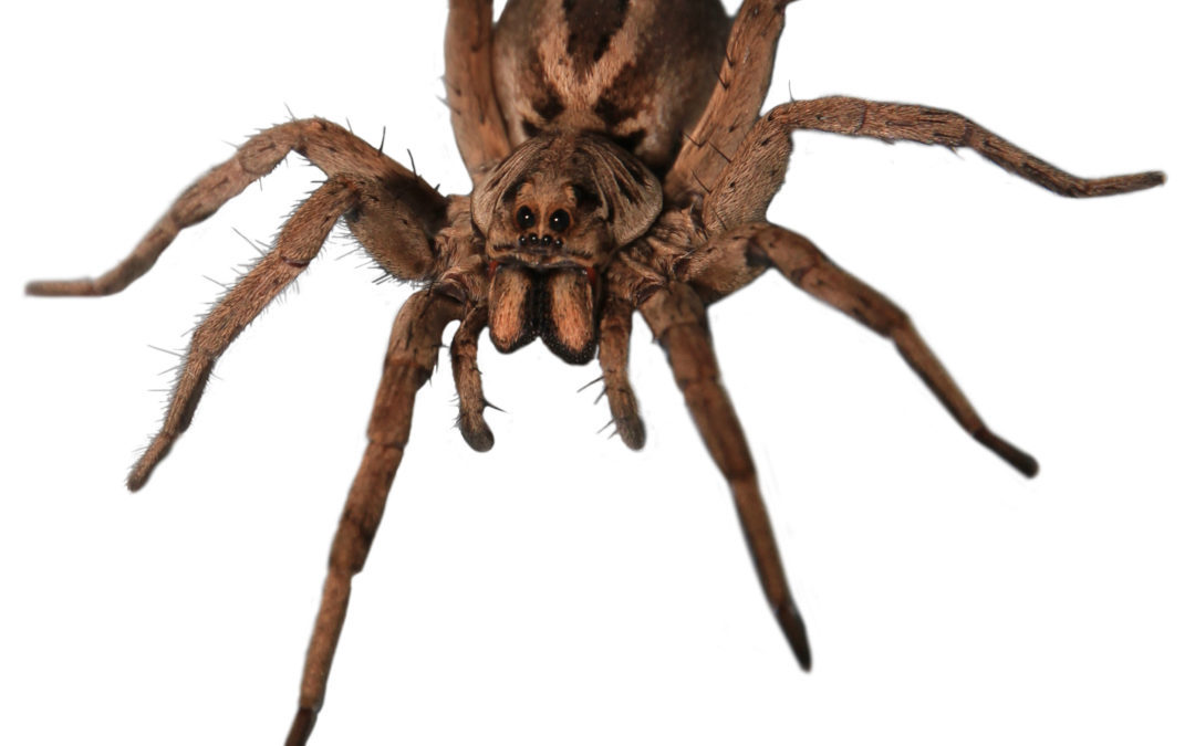 Pest Control In McKinney, TX: Pests You?ll Still See This Winter