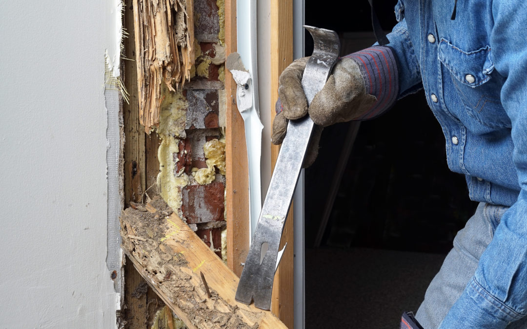 Termite Inspection In McKinney, TX: What An Inspector Looks For
