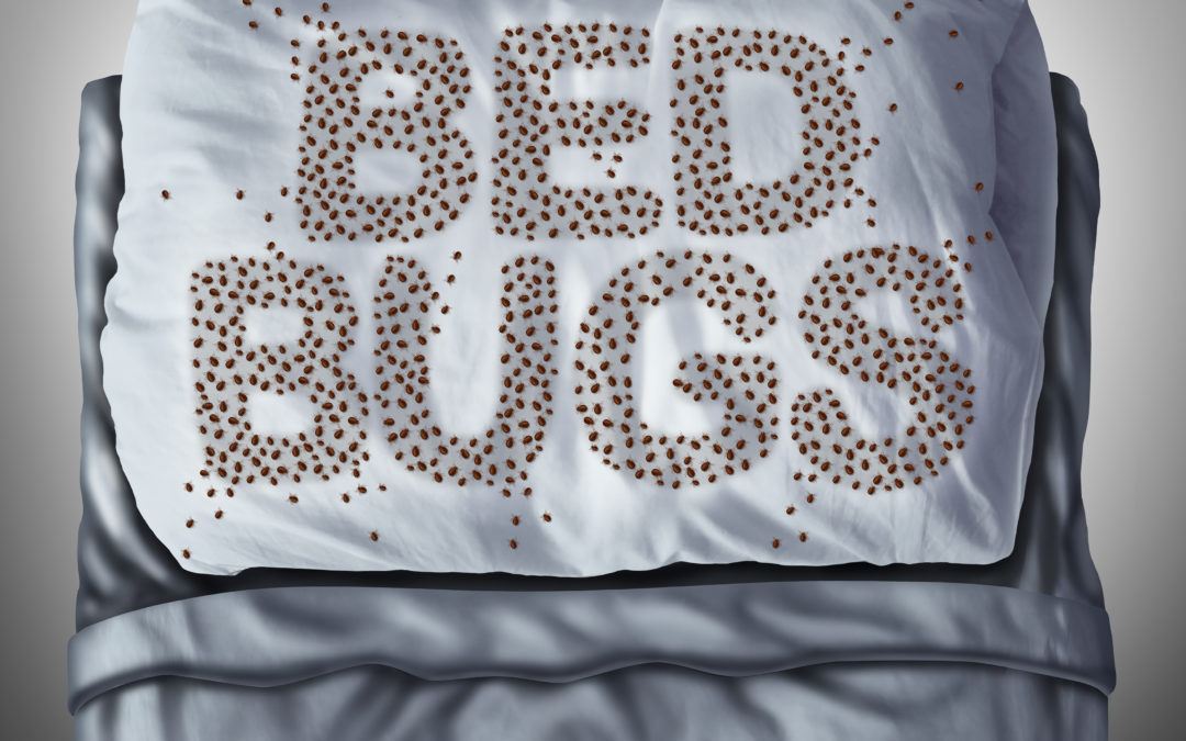 How To Kill Bed Bugs In McKinney, TX: Get Professional Help