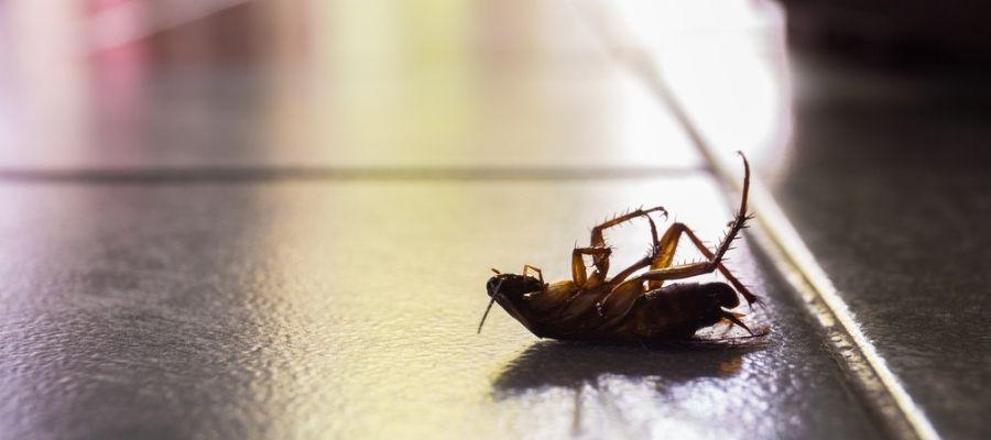Dead cockroach on floor - houston roach exterminators
