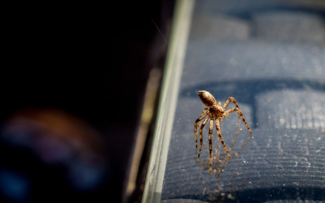 Houston Texas Flying Spiders: What Are They & Should You Be Concerned?