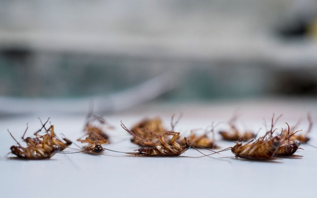 What To Do After Pest Control Sprays For Roaches