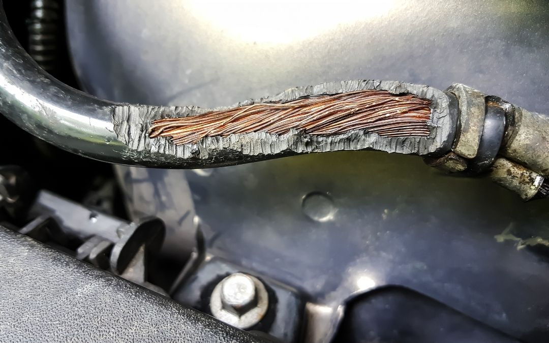 Chewed car wires with exposed internal wiring