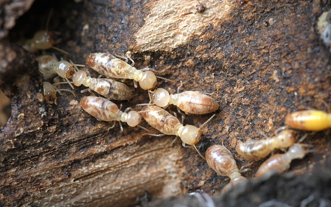 How Often Should You Treat for Termites? What Homeowners Need To Know