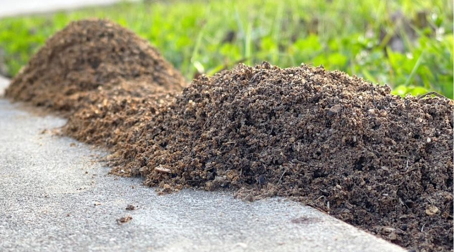 Fire ant mounds on the edge of a lawn, spilling over onto a sidewalk.
