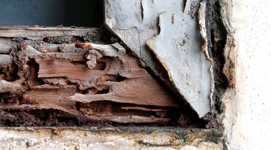 Close-up of wood damage caused by termites